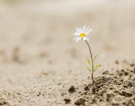 Learning to Shine in the Dark Resilience for Survivors and Those Serving Survivors