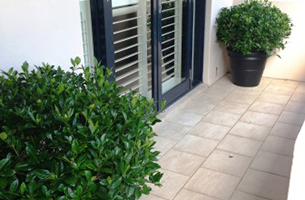 gardenia-shrubs-entry-rentagarden