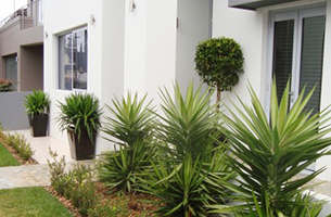 yuccas-emerald-topiary-entry-rentagarden