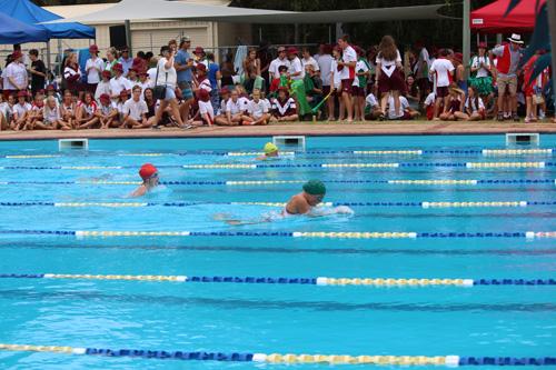 SC 2016 swim carnival 304
