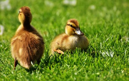 Meet DuckDuckGo, the Private Alternative to Google