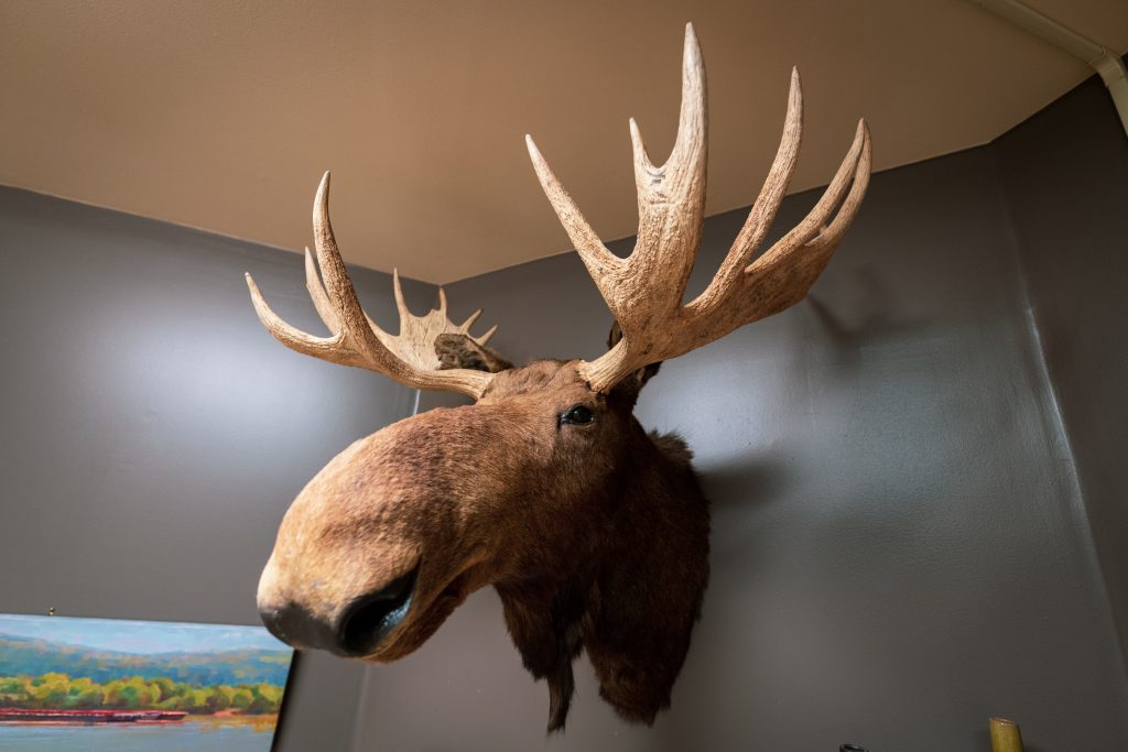 Kevin the Moose in Louisville KY