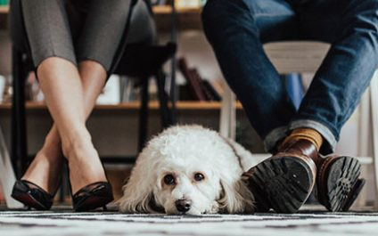 Divorce and pet custody: fighting over cats and dogs