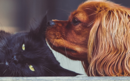Alimony, custody, and other pet-y issues concerning cats and dogs