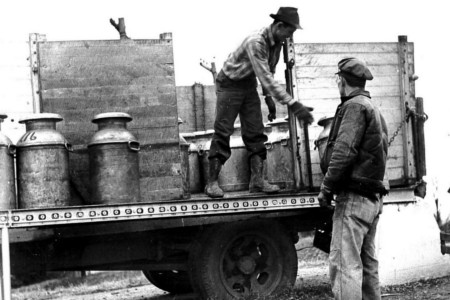 Framers loading milk to be taken to a Consumer-Farmer plant