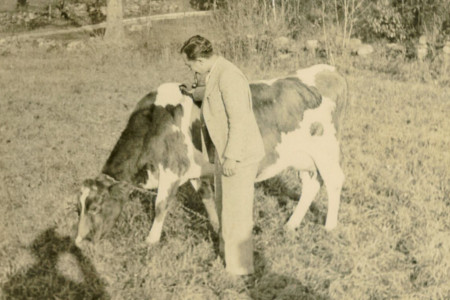 Meyer with Cora the Cow