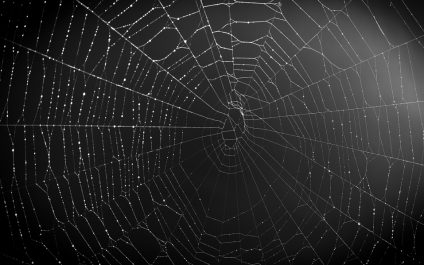 What is the Dark Web and Why Should We Care?