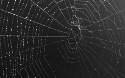 Dark Web and Business: What Is It and Why Should My Business Care?