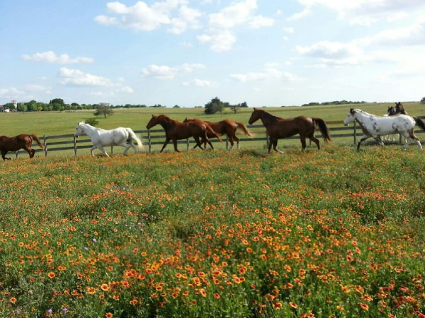 Our profesional horse trainer is ready to guide you through this essential Texas ranch experience.