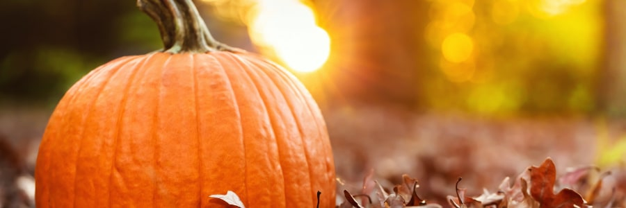blog-img-nutritional-benefits-of-pumpkin