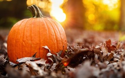 Nutritional Benefits of Pumpkin