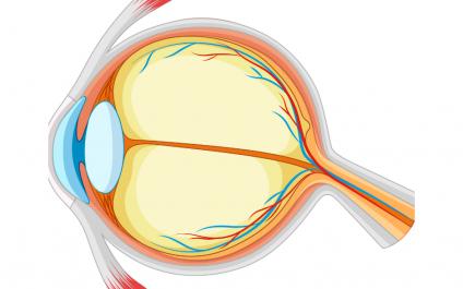 September 17, 2021 Newsletter: Your eye health, WFH ergonomics, and understanding dietary fat