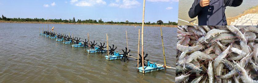 Asian Aquaculture 2018