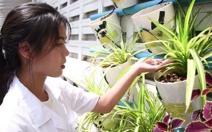Novel Media: 3-in-1 Innovation for Better Environment