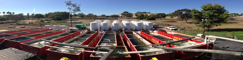 Understanding and Mitigating the Environmental Impacts of Dewatering.