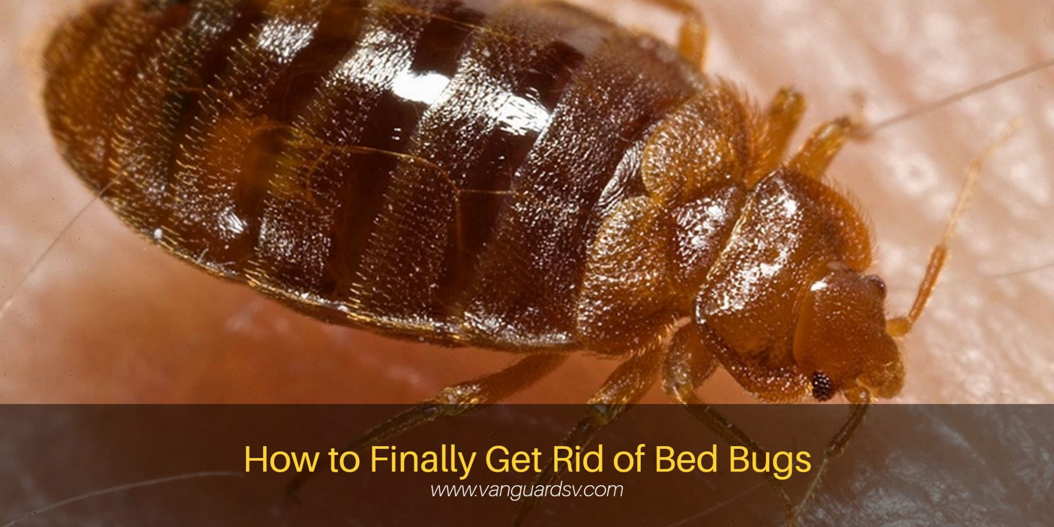 Janitorial Services Tips To Get Rid Of Bed Bugs Fresno