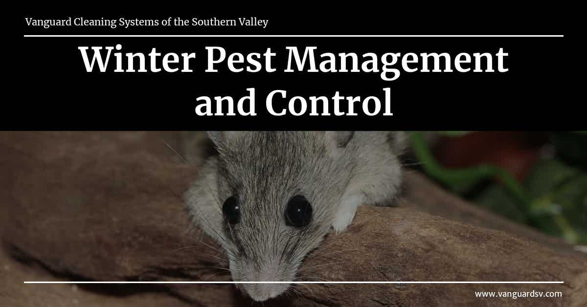 Winter Pest Management and Control