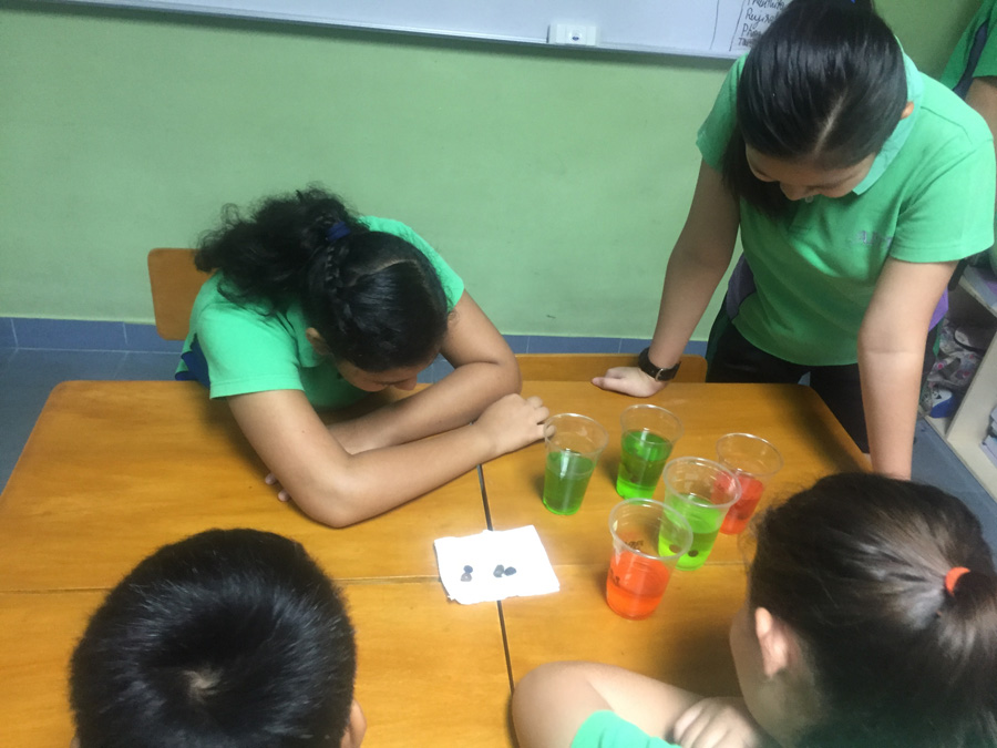osmosis-grape experiment Diffusion-food color experiment