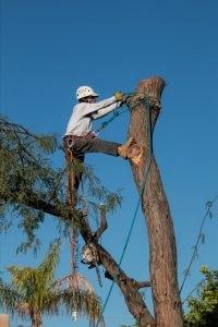 Tree-removal-210x300