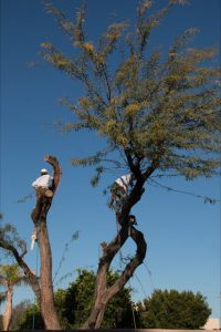 Tree-removal-photo-6-200x300