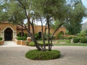 olive-tree-300x225