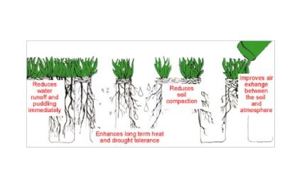 The Benefits of Lawn Aeration in Phoenix, AZ