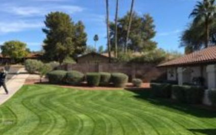 Rejuvenating Your Lawn for the Summer