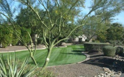 Winter Lawn Overseeding in Phoenix, Arizona