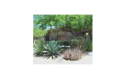 Phoenix Landscape Maintenance To Do List for Month of June