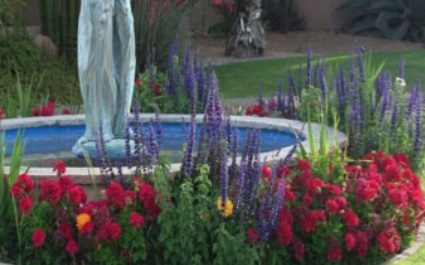 Winter Flowers October Special From Goodman's Landscape