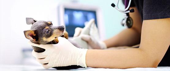 img-Pet-hospitals