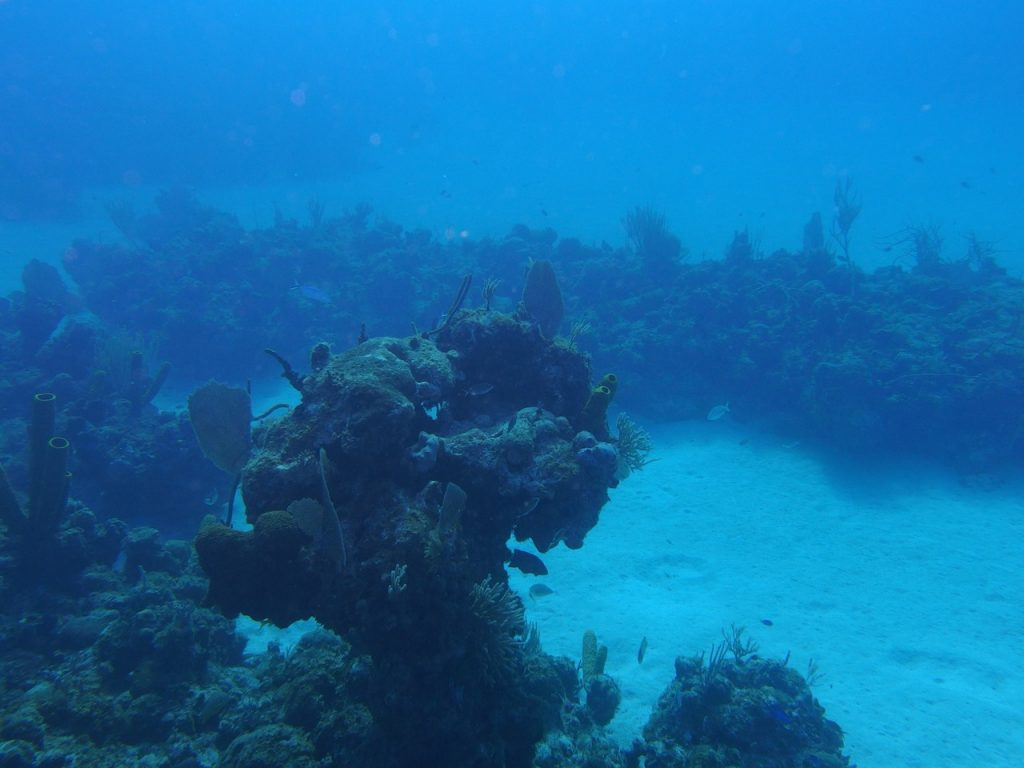 Punta-Frances-coral-reef-1024x768