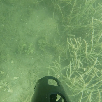 img-cover-Water-Sampling-in-Biscayne-Bay-with-RSMAS-r1