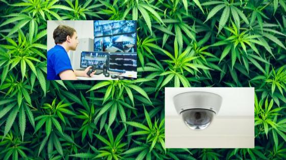 Cannabis Security