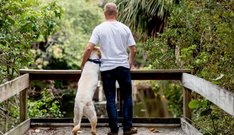 Finding a solution to pet anxiety with the help of Office 365