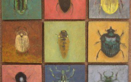 Meet the Beetles