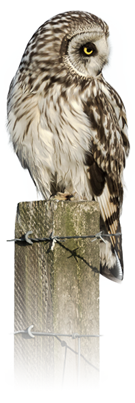 aboutus_owl