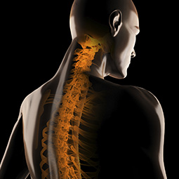 Thoracic Spine - Redlands, Loma Linda, Highland