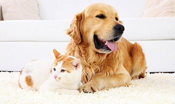 Pet Stain Removal - Hampton Roads, Norfolk, Virginia Beach